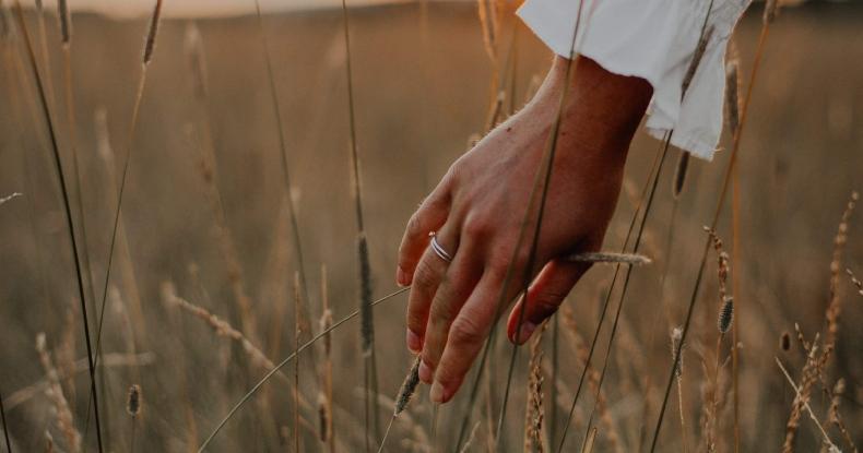 Жіноча рука торкається колосків