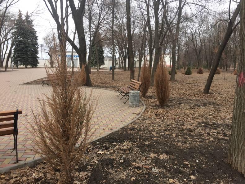 Засохшие туи в парке Пушкина