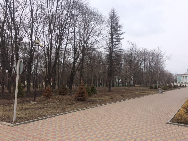 Засохшие растения в парке Пушкина